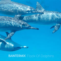 Flock of Dolphins