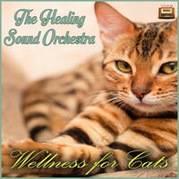 Wellness for Cats