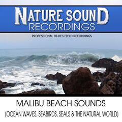 Malibu Beach Sounds (Ocean Waves, Seabirds, Seals & The Natural World)