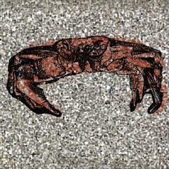 It's Shellfish to Be Crabby