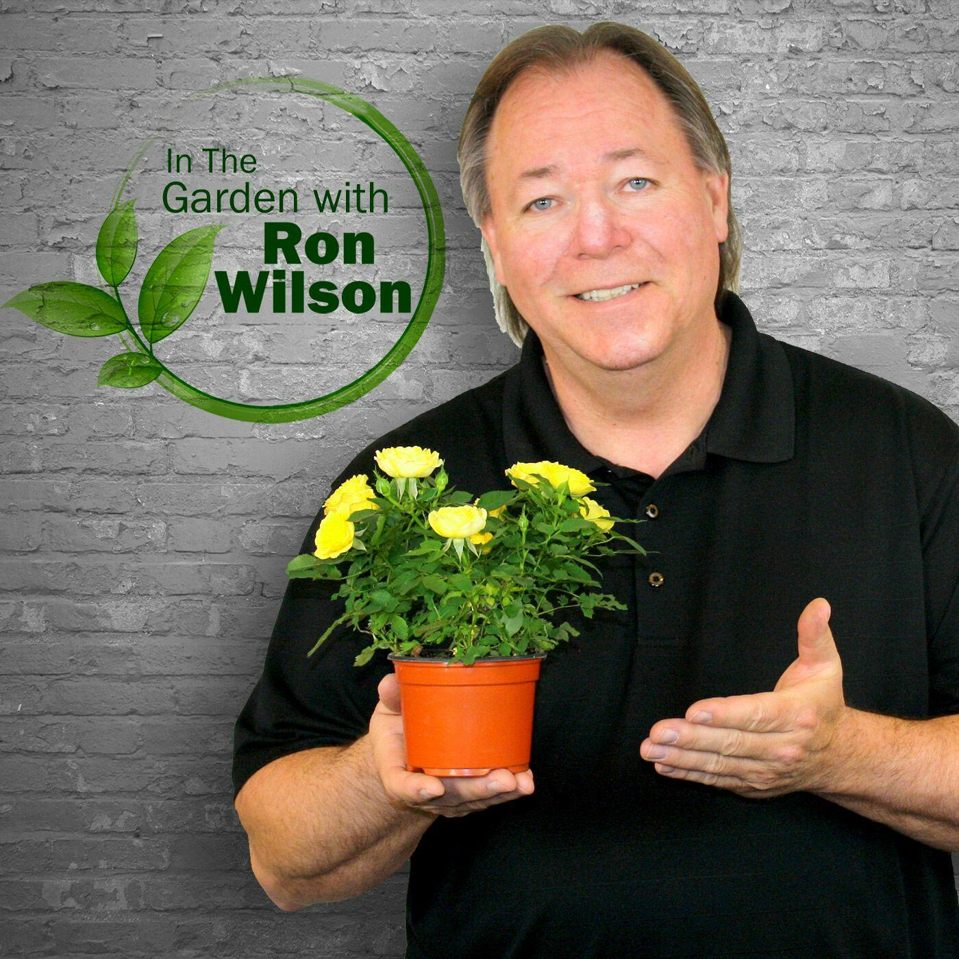 listen free to in the garden with ron wilson on